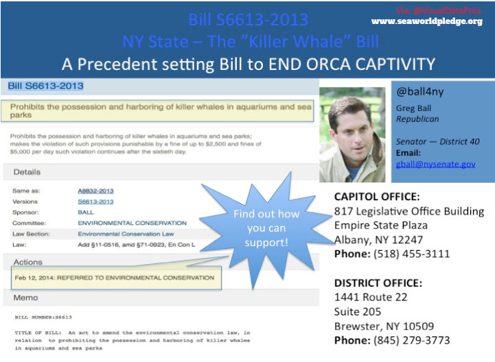 greg-ball-orca-bill-graphic