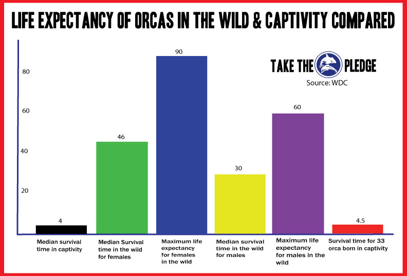orca-vs-wild-life-expectancy-in-captivity