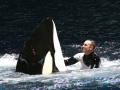 hargrove-blackfish-seaworld-2