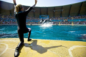 If not freed, what does Lolita's future Hold?