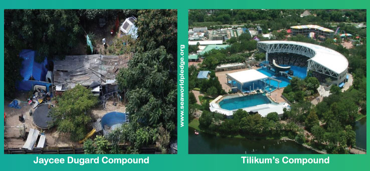 Tilikum Dugard Comparison of Compounds